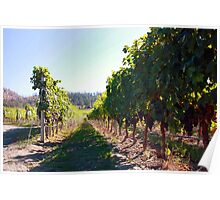 Upper Vineyard at Cedar Creek Estate Winery Poster
