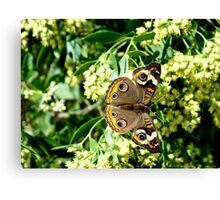 Beauty & Design in Nature Canvas Print