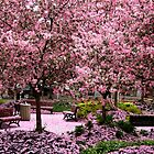 Pink Apple Blossoms by djnoel
