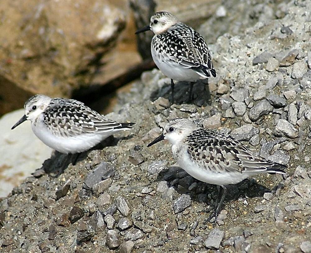 little birdies by wolf6249107