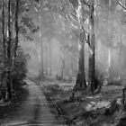 Toolangi State Forest  by Christine Wilson
