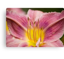 Day Lilly Up Close Canvas Print