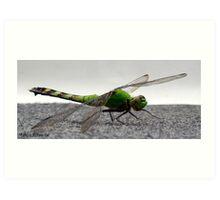 Incredible green Dragonfly Art Print