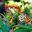 The Butterfly by yamiyalo