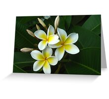 Frangipani flowers Greeting Card