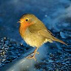 Robin on ice by Stephen Kane