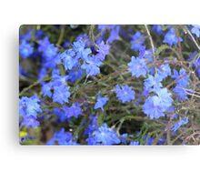Stunning Blue Leschenaultia Metal Print