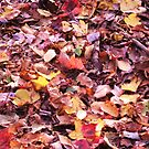 The Crunch of Leaves by teresa731