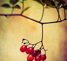 Ruby Red Berries by Erin Reynolds