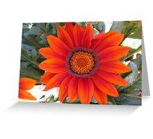 Orange Red Flower Greeting Card