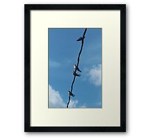 Swallows Framed Print