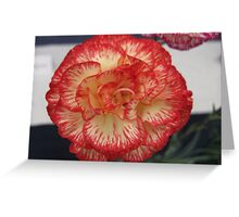 Red and Yellow Carnation Greeting Card