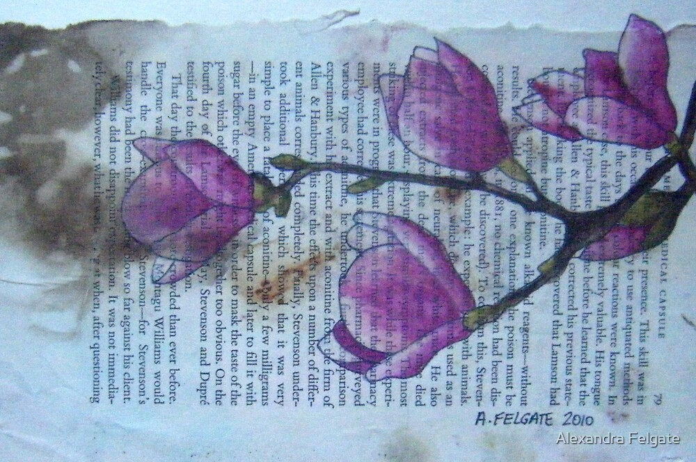 Magnolias VIII by Alexandra Felgate