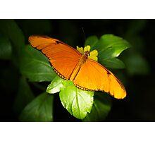A range of Orange Photographic Print