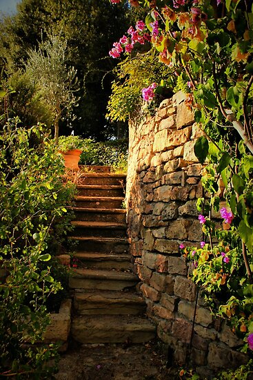 Garden Steps by Barbara  Brown