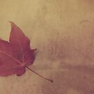 Autumn Leaf by ©Maria Medeiros