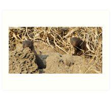 Dwarf mongoose on termite mound Art Print