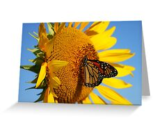 Sitting Pretty on a Sunflower Greeting Card