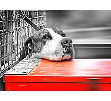 Dog Gone Sad Photographic Print