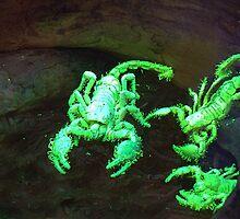 Scorpions that Glow by Kathy Newton