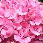 Pretty Pink Hydrangea by IAIO