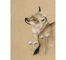 Baby Fox Photographic Print