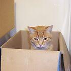 Box cat by AmandaWitt