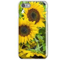 Yellow sunflowers in bloom iPhone Case/Skin