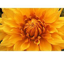 Golden Dahlia Photographic Print