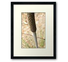 Xanthorrhoea flower spike Framed Print