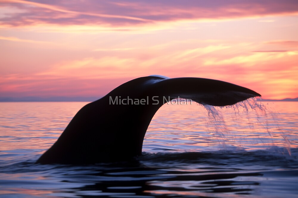 "Whale of a ""tale"" by Michael S Nolan"