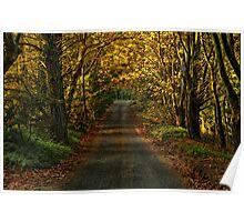 Shipley Lane in Autumn Poster