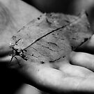 Hand and Leaf by Paul Davis