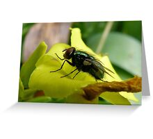 Highly Polished Greeting Card