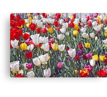 tulips all colours Canvas Print