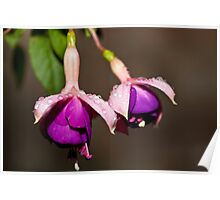 Blooming Wet Poster