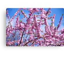 Floral Fireworks - Cherry Blossom style Canvas Print