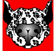 Bull Terrier Leopard Cow Photographic Print