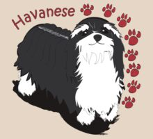 Havanese by Diana-Lee Saville