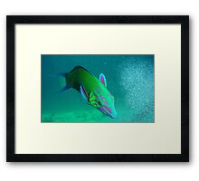 the humorous artisans parrotfish Framed Print