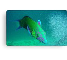 the humorous artisans parrotfish Canvas Print