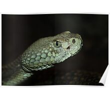 Pit Viper Up Close Poster