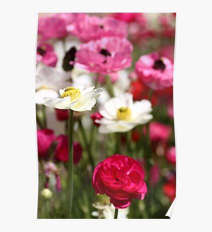 Spring Garden Poster