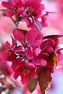 Just Pink by yolanda