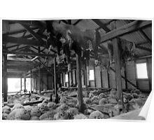 Shearing Shed Lismore Vic Poster