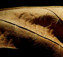 DETAILS OF A LEAF by Sandra  Aguirre