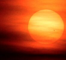 BIRD SILHOUETTED AGAINST THE SUN by Sandra  Aguirre