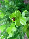 A Ladybug's View by Barberelli