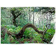 Sherwood Forest National Nature Reserve Poster