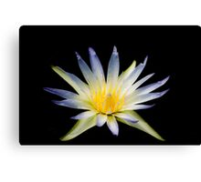 water lily on black Canvas Print